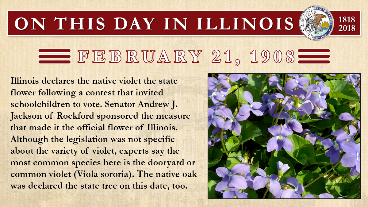 Feb. 21, 1908: Illinois declares the native violet the state flower following a contest that invited schoolchildren to vote